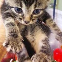 Adopt A Pet :: Tanner - Savannah, TN