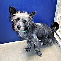 Adopt A Pet :: Terrier male X - San Jacinto, CA