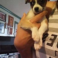Adopt A Pet :: Carla - LAKEWOOD, CA