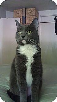 Domestic Longhair Cat for adoption in Monrovia, California - Gracy
