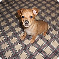 Adopt A Pet :: Adam - San Diego, CA