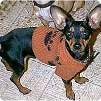 Adopt A Pet :: Ricardo - dewey, AZ