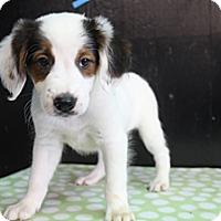 Adopt A Pet :: Onyx - Wytheville, VA