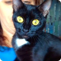 Adopt A Pet :: Midnight - Green Bay, WI