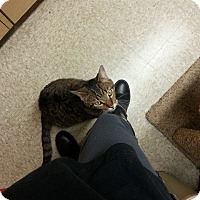 Adopt A Pet :: Leo - West Dundee, IL