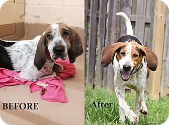 Hound (Unknown Type) Mix Dog for adoption in Chattanooga, Tennessee - Cranberry