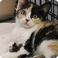Adopt A Pet :: Willa - Sacramento, CA