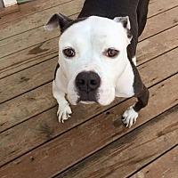 Adopt A Pet :: Hercules - Savannah, GA