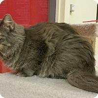 Adopt A Pet :: Miss Kitty - Phoenix, AZ