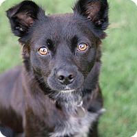 Adopt A Pet :: Lexi - Knoxville, TN