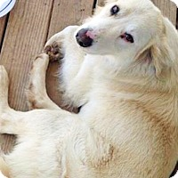 Adopt A Pet :: Griffin - BIRMINGHAM, AL