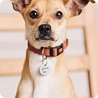 Adopt A Pet :: Spice - Portland, OR