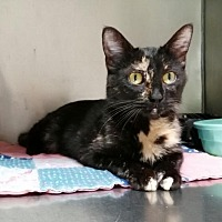 Adopt A Pet :: Maui - Mountain View, AR