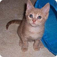 Adopt A Pet :: Speedy - Richmond, VA