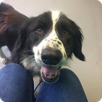 Adopt A Pet :: Newman - Rockville, MD