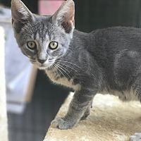 Adopt A Pet :: Rafaella - Island Park, NY