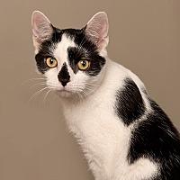 Adopt A Pet :: Sloppy Joe - Wilmington, DE