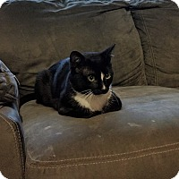 Adopt A Pet :: Meteor - Homewood, AL