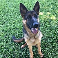 Adopt A Pet :: Frankie 0746 - Coral Springs, FL