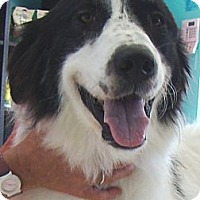 Adopt A Pet :: Ramsey  *Adopted - Oklahoma City, OK