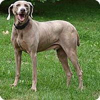 Adopt A Pet :: Shack - Toronto/Etobicoke/GTA, ON