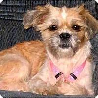 Adopt A Pet :: Katie - Mays Landing, NJ