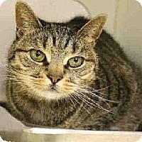 Adopt A Pet :: Precious - Fairfield, CT