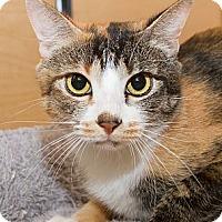 Adopt A Pet :: Alouette - Irvine, CA