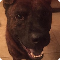 Adopt A Pet :: St. Peter in TX - Mira Loma, CA