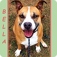 Adopt A Pet :: BELLA - Dallas, NC