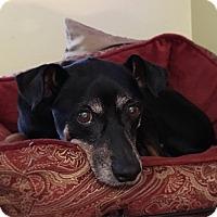 Adopt A Pet :: Bubba - Davie, FL