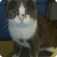 Adopt A Pet :: Tim Bit - Hamburg, NY