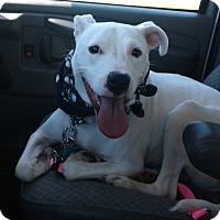 Adopt A Pet :: Trooper - Rockford, IL
