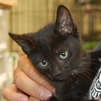 Adopt A Pet :: Nash - Brooklyn, NY
