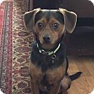 Adopt A Pet :: pablo