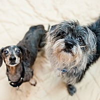 Adopt A Pet :: Bob and Buddy - Kennesaw, GA