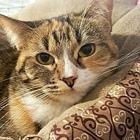 Adopt A Pet :: Farrah - McPherson, KS