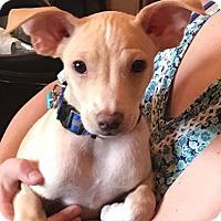 Adopt A Pet :: Max - Marlton, NJ