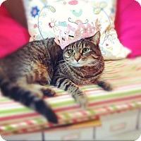 Adopt A Pet :: Daisy - Manchester, CT