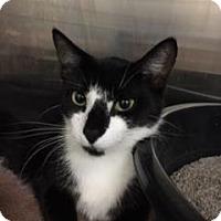 Adopt A Pet :: Jinny - Gulfport, MS