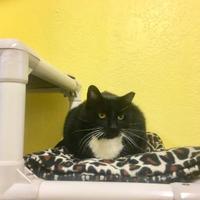Adopt A Pet :: Sara W/ Sally - Camano Island, WA