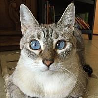 Adopt A Pet :: Princess - West Palm Beach, FL