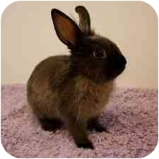 Other/Unknown Mix for adoption in Montclair, California - DOVE