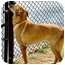 Photo 2 - Shepherd (Unknown Type)/Collie Mix Dog for adoption in Inman, South Carolina - Bob