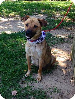 Shepherd (Unknown Type) Mix Dog for adoption in Kimberton, Pennsylvania - Whitney
