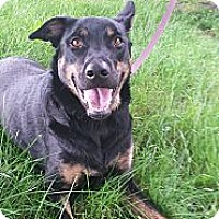 Adopt A Pet :: Tansi - Surrey, BC