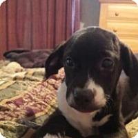 Adopt A Pet :: Mia - Randolph, NJ