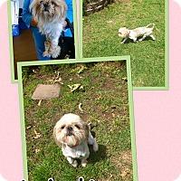 Adopt A Pet :: Melina - Scottsdale, AZ