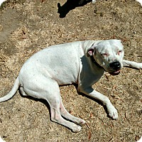 Adopt A Pet :: Leche (Courtesy List) - La Habra, CA