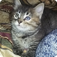 Adopt A Pet :: Quinn - Whittier, CA